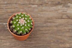 Пустыня кактуса, естественная предпосылка Стоковые Фото