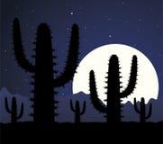 пустыня кактуса Стоковые Фото