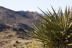 пустыня кактуса Стоковое фото RF