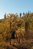 пустыня кактуса Стоковое Изображение