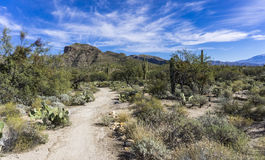 Пустыня каньона Sabino Стоковые Изображения RF