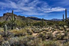 Пустыня каньона Sabino Стоковые Фотографии RF