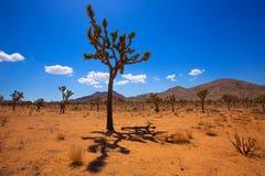 Пустыня Калифорния Mohave долины юкки национального парка дерева Иешуа стоковая фотография rf
