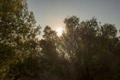 Пустыня ладоней на зоре Стоковое фото RF