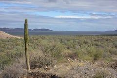 Пустыня & море Стоковые Изображения RF