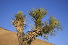 Пустыня Мохаве Стоковая Фотография RF