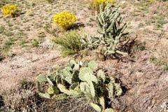 Пустыня национального парка Cibola сухая Стоковые Фото