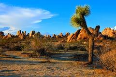 Пустыня на сумраке, Калифорния дерева Иешуа Стоковые Фото