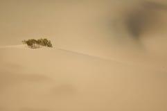 Пустыня на Death Valley, CA Стоковые Фото