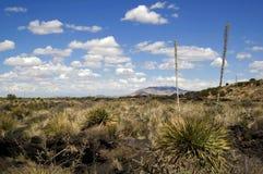 Пустыня Неш-Мексико Стоковая Фотография