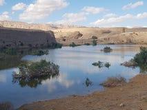 Пустыня оазиса с заводами стоковая фотография