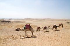 Пустыня около Каира Стоковая Фотография RF