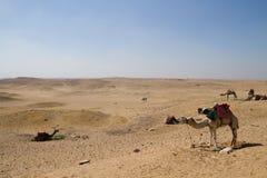 Пустыня около Каира Стоковые Фото