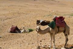 Пустыня около Каира Стоковые Изображения RF