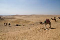 Пустыня около Каира Стоковые Изображения