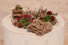 Пустыня Роза в flowerbed Стоковое фото RF
