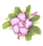 Пустыня Роза цветков Стоковая Фотография RF
