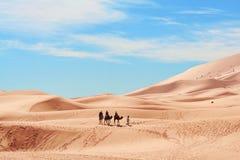 пустыня Сахара стоковые фото
