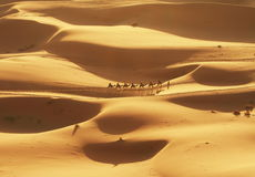 пустыня Сахара стоковое фото rf