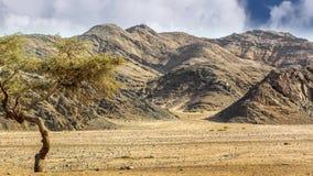 пустыня Сахара видеоматериал