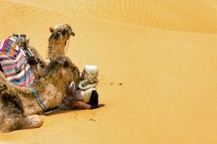 Пустыня Сахары в Тунисе с человеком и верблюдами стоковое изображение