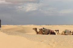Пустыня Сахары Тунис, Ghlissia Kebili стоковые фотографии rf