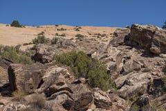 Пустыня сгабривает национальный парк стоковые изображения
