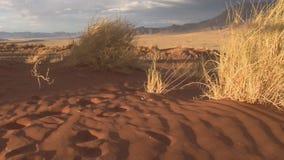 Пустыня Северной Африки видеоматериал