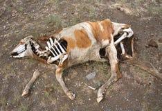 пустыня смерти Стоковое Фото
