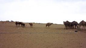 Пустыня соли Kashan Maranjab видеоматериал