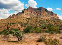 Пустыня Соноры Стоковая Фотография