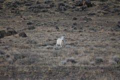 Пустыня устрашает кочевать живой природы свободный стоковое изображение rf