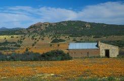 пустыня цветенй стоковое изображение