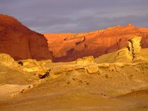 Пустыня цветов стоковые фото