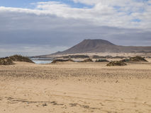пустыня Стоковые Изображения RF