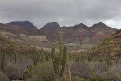Пустыня Baja Стоковые Фотографии RF