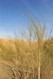 пустыня bush одичалая стоковые изображения