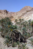 Пустыня Chebika Сахары оазиса, Тунис, Африка Стоковые Изображения