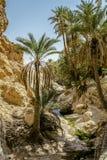 Пустыня Chebika Сахары оазиса, Тунис, Африка Стоковое Изображение
