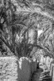 Пустыня figuig, Марокко стоковые изображения