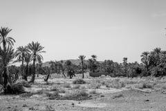 Пустыня figuig, Марокко стоковая фотография