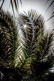 Пустыня figuig Стоковое Изображение