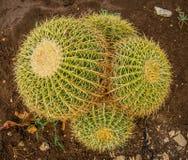 пустыня fuerteventura Испания кактусов Стоковые Фото