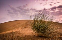 Пустыня Jaisalmer Стоковое Фото