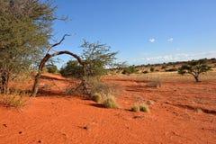 пустыня kalahari Намибия Стоковая Фотография