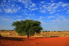 Пустыня Kalahari Стоковое Изображение RF