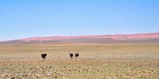 Пустыня Namib, Африка Стоковое Фото