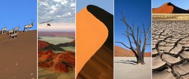 Пустыня Namib - Намибия Стоковые Фотографии RF
