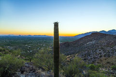 Пустыня Sonoran в Аризоне стоковые изображения