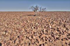 Пустыня Sturt каменистая, южная Австралия Стоковое фото RF